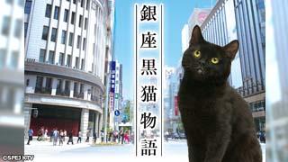 ドラマ「銀座黒猫物語」のサムネイル
