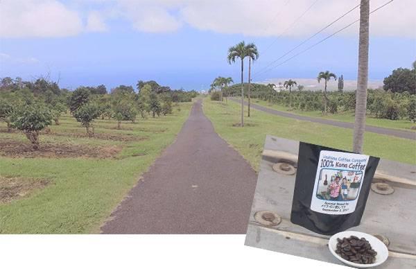 UCCハワイ コナコーヒー エステート