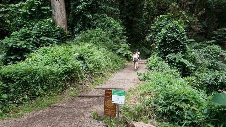 その先に絶景が待っている!ハワイのトレッキングコースに挑戦