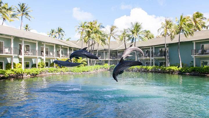 高級ホテルのラグーンでイルカを観察