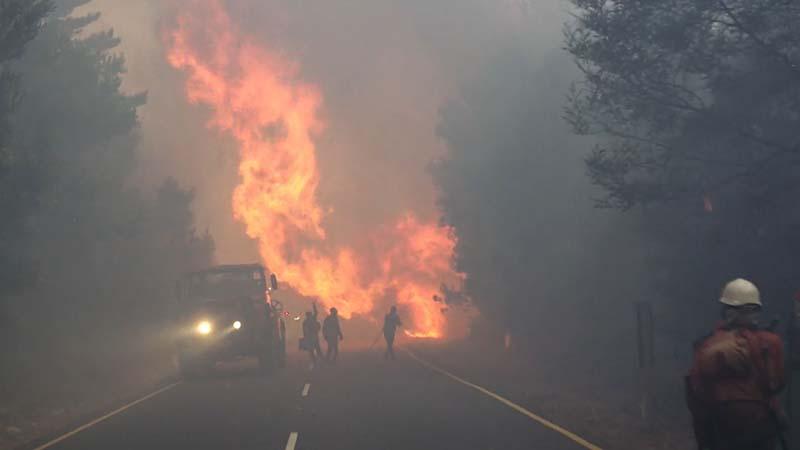 森林火災の大解剖