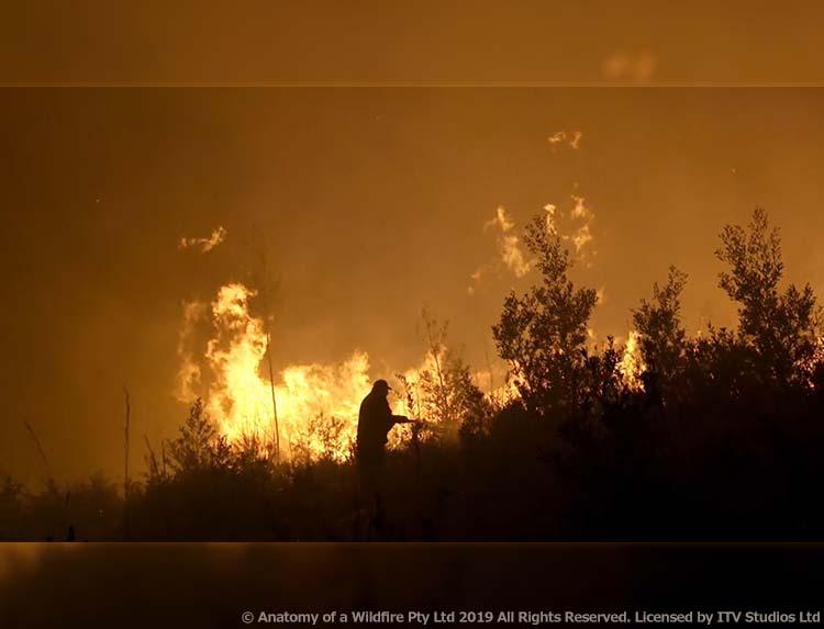 森林火災の大解剖のメインビジュアル