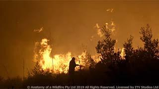 世界中で荒れ狂う、大規模森林火災の実態に迫る 英国ドキュメンタリー「森林火災の大解剖」 10月26日(火)よる9時~BS12 トゥエルビで放送のサムネイル