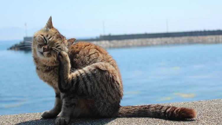 旅猫ロマンのサムネイル